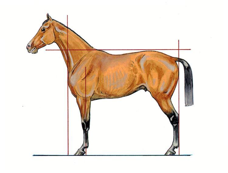 choisir et acqu rir son cheval avoir le coup d 39 oeil et savoir quoi s 39 attendre lors de la. Black Bedroom Furniture Sets. Home Design Ideas