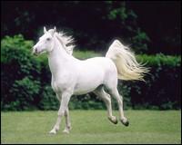 Image: blanc.jpg