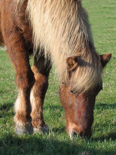 Image: cheval-au-pre.jpg