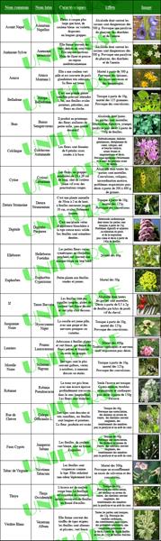 Image: plantes_hautement_toxiques_ptit.jpg