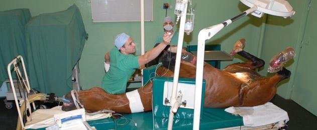 V t rinaire qu 39 est ce qu 39 un v t rinaire unihorse for Service veterinaire cuisine